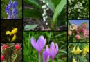 List of Harmful Flowers all over the World